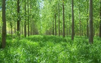 Potencian los bosques del Delta con una receta neocelandesa