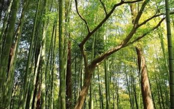 Simposio sobre la bioeconomía del bambú