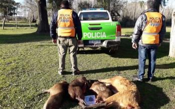 Detuvieron a dos cazadores en Zárate Brazo Largo con un ciervo de los pantanos
