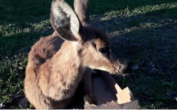 El compromiso de una comunidad por preservar las especies en peligro de extinción en el delta