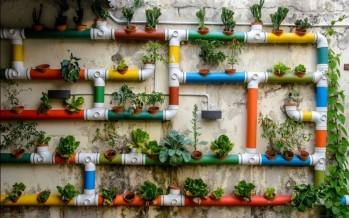 Calendario de siembra: qué plantar en nuestra huerta urbana