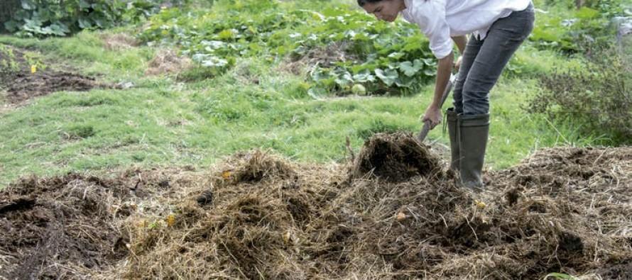 Compost: todo lo que tenés que saber para lograr tu propio abono orgánico