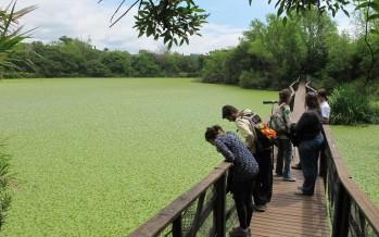 Descubrí las áreas protegidas de San Isidro