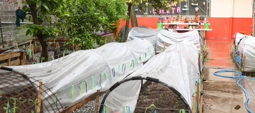 San Fernando: el Colegio Madre Rafaela avanza en el proyecto de una huerta natural orgánica