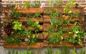 Calendario de siembra: qué plantar en mayo en la huerta del balcón