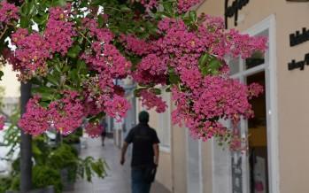 San Fernando: se plantarán 10 mil árboles nuevos durante este año