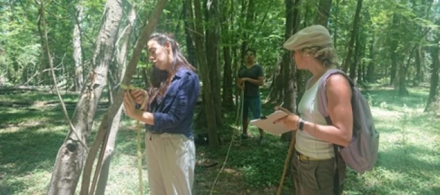 El Comité de Cuenca del Río Luján realizó el primer relevamiento de Acacias Negras