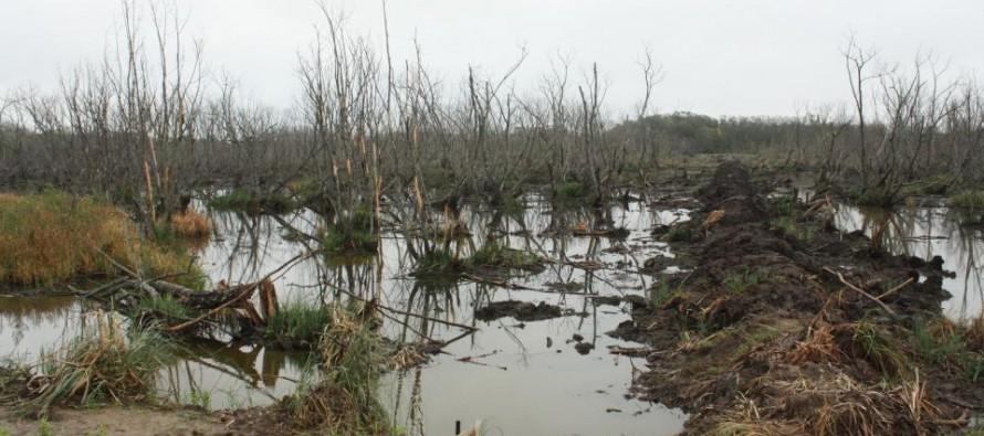 Humedales y biodiversidad en riesgo