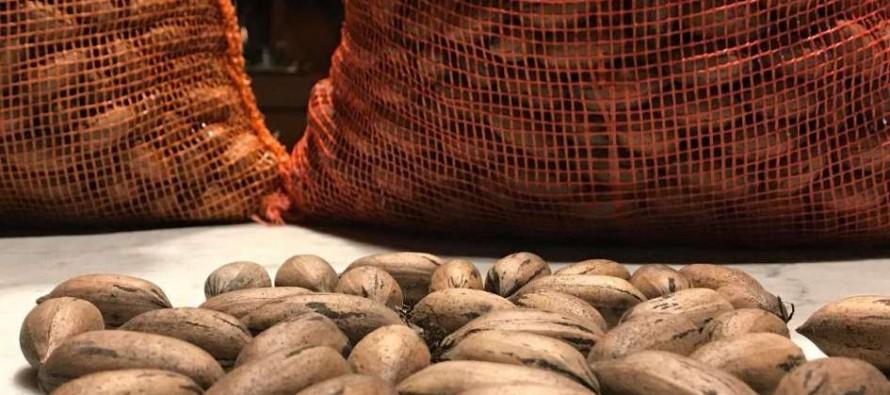 Argentina realizó la primera exportación de nuez pecán por vía aérea