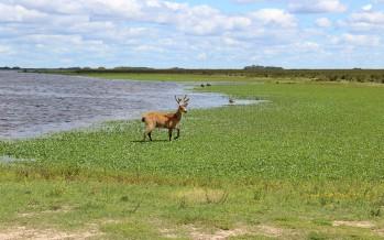 Por el Coronavirus se cierran los Parques Nacionales