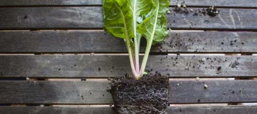 Mini huerta: frutas y verduras recomendadas para cultivar en macetas