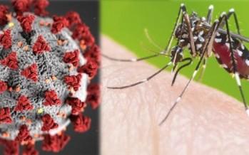 Que el virus no te tape al mosquito