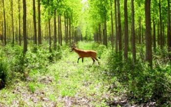 La importancia de conservar los servicios ecosistémicos de la costa bonaerense e islas del Delta del Paraná
