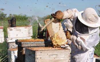 El INTA ofrece un curso online gratuito sobre apicultura