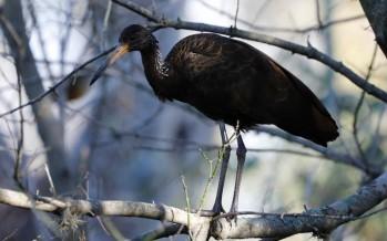 La ausencia de personas y de vehículos pobló de aves la ribera de la zona norte