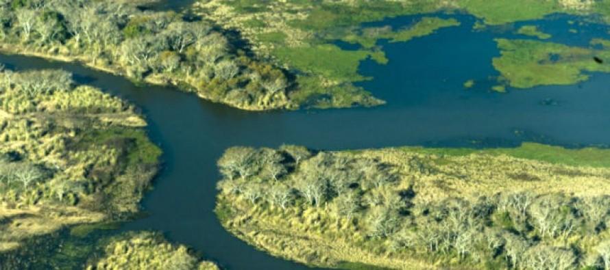 Delta del Paraná: avances para crear un área natural protegida en la zona