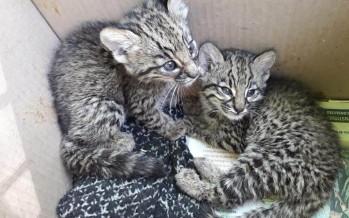 Campaña del Centro de Rescate de Fauna Silvestre de Fundación Temaikén