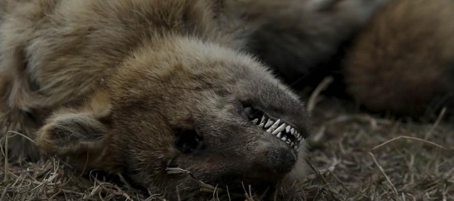 """Ambientalistas denuncian la pérdida """"casi total"""" de la fauna de las islas por las quemas"""