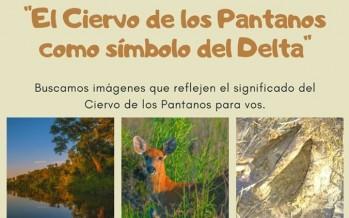 Proyecto Pantano lanza un concurso fotográfico para estudiantes del Delta