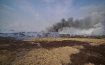 Se reunió nuevamente el Comité de Emergencia Ambiental por los incendios en el delta del Paraná