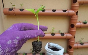 Huertas: cinco consejos clave para producir plantines
