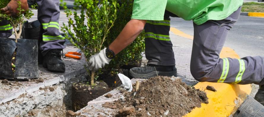 San Fernando plantó nuevos arbustos en las principales avenidas de la ciudad