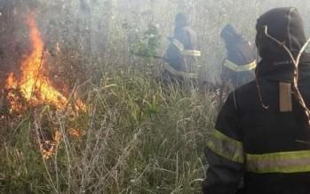 Bomberos de San Fernando apagaron un incendio en el Delta
