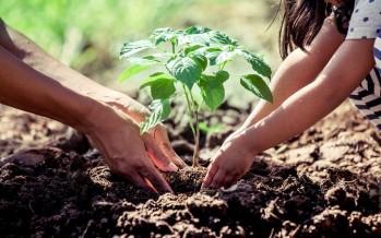 Diferentes organizaciones ambientales piden la aprobación de la Ley de Educación Ambiental
