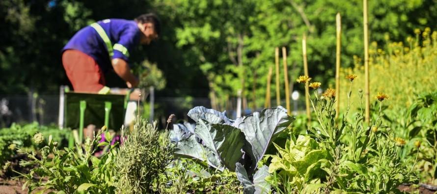 Escobar: la huerta agroecológica Municipal finalizó su quinta cosecha