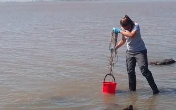 Tomaron muestras del Río de la Plata para conocer la calidad del agua