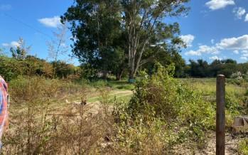 Ambientalistas y vecinos promueven la primera Reserva Natural Urbana y Pública de Tigre